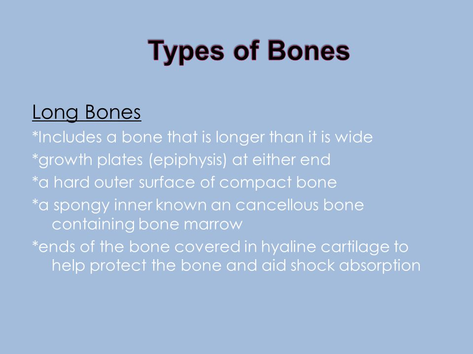 *The outer layer of a bone is compact bone, which is hard and dense *The next layer is spongy bone, which is like honeycomb, lighter and slightly flexible *The inner layer of some bones, but not all is bone marrow, which is jelly like *Bone marrow is used for blood cell formation