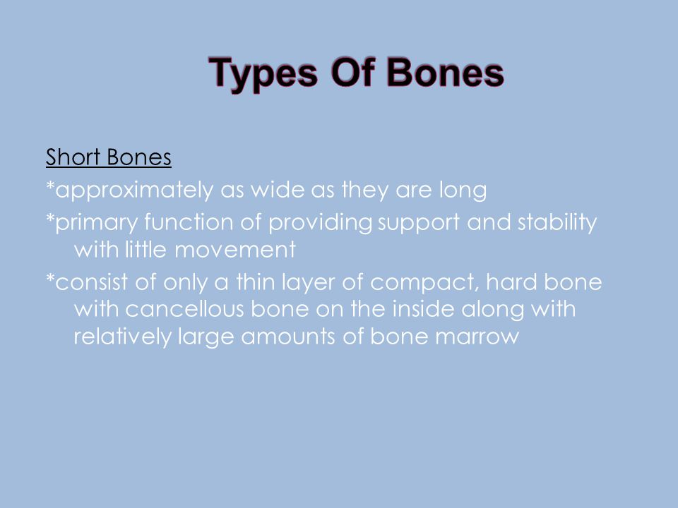 Short Bones *approximately as wide as they are long *primary function of providing support and stability with little movement *consist of only a thin layer of compact, hard bone with cancellous bone on the inside along with relatively large amounts of bone marrow