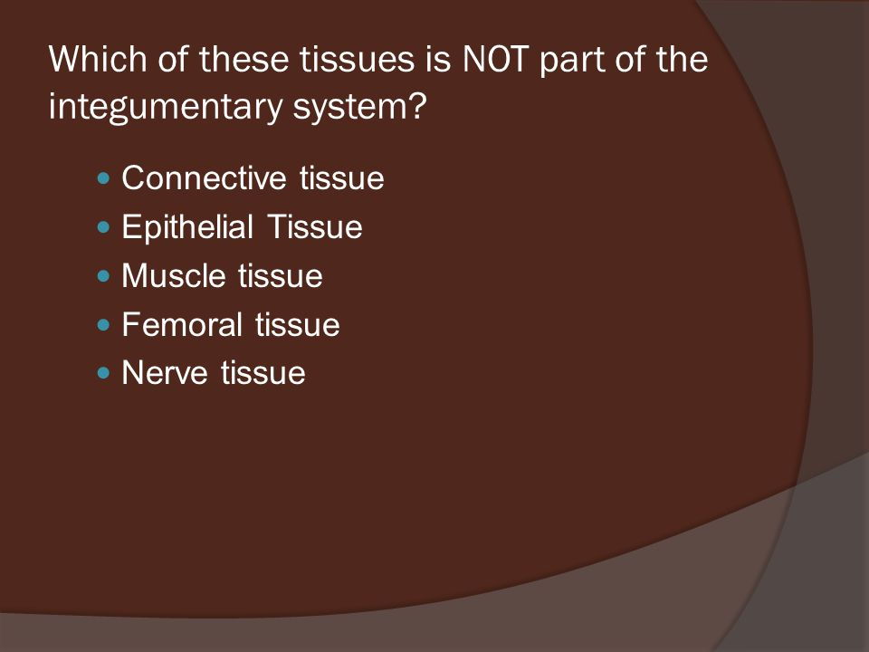 Which of these tissues is NOT part of the integumentary system.