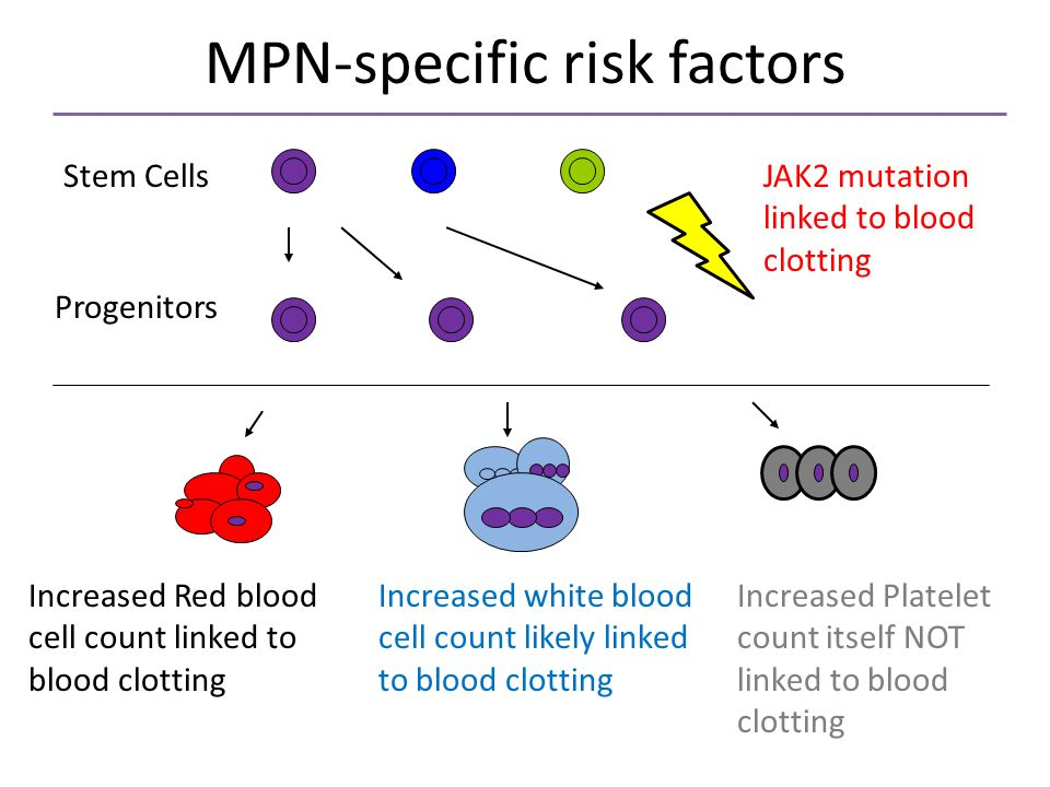 MPN-specific risk factors JAK2 mutation linked to blood clotting Stem Cells Progenitors Increased Red blood cell count linked to blood clotting Increased white blood cell count likely linked to blood clotting Increased Platelet count itself NOT linked to blood clotting