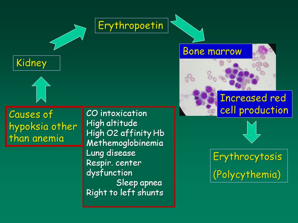 Kidney Bone marrow Erythropoetin Increased red cell production Causes of hypoksia other than anemia Erythrocytosis(Polycythemia) CO intoxication High