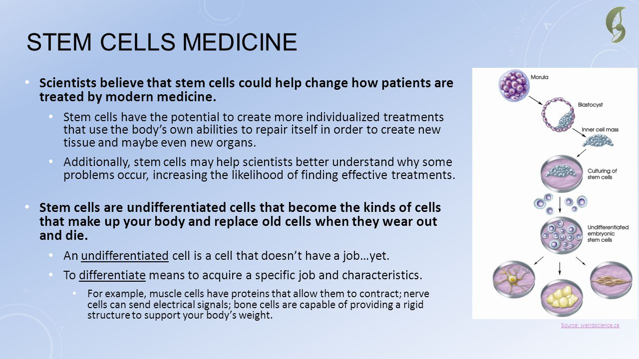 STEM CELLS MEDICINE Scientists believe that stem cells could help change how patients are treated by modern medicine. Stem cells have the potential to