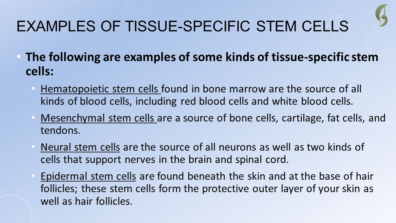 EXAMPLES OF TISSUE-SPECIFIC STEM CELLS The following are examples of some kinds of tissue-specific stem cells: Hematopoietic stem cells found in bone