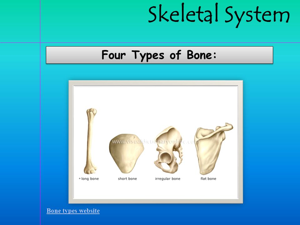 Structure of a long bone includes: Structure of a long bone includes: Bone types tutorial  Diaphysis is the long central shaft.