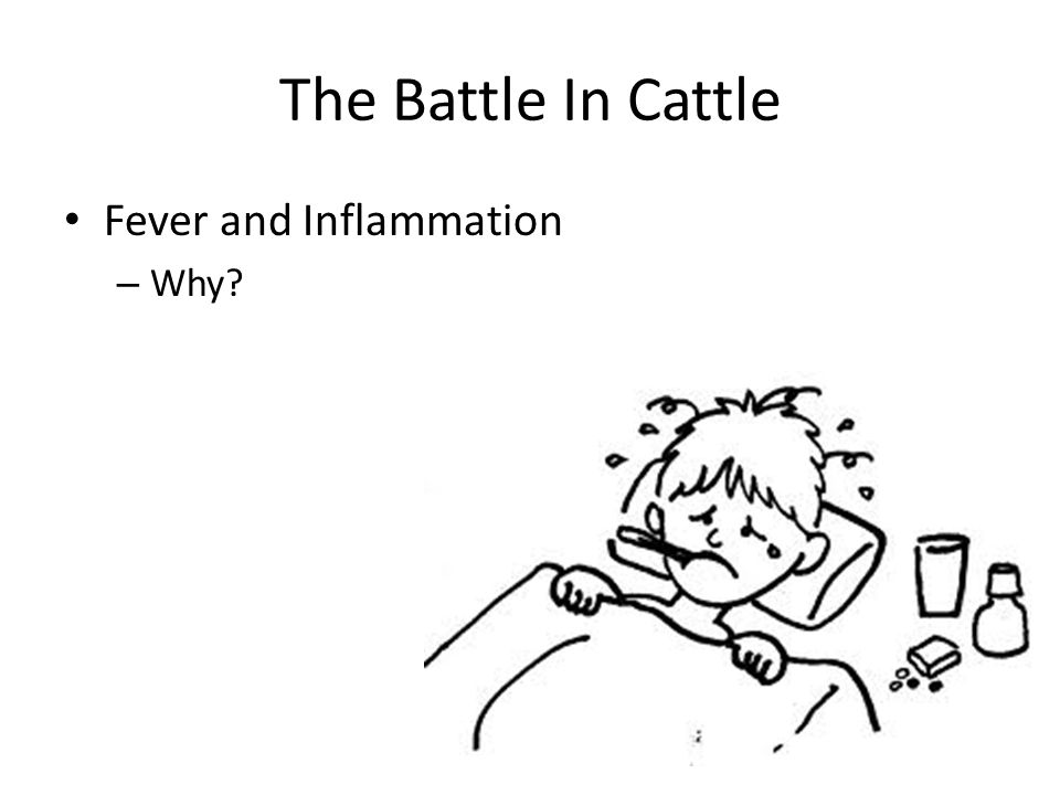 The Battle In Cattle Fever and Inflammation – Why?
