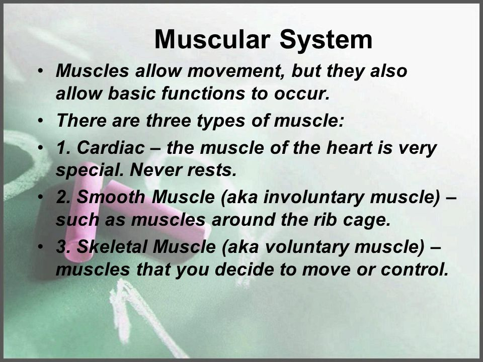 Muscular System Muscles allow movement, but they also allow basic functions to occur. There are three types of muscle: 1. Cardiac – the muscle of the