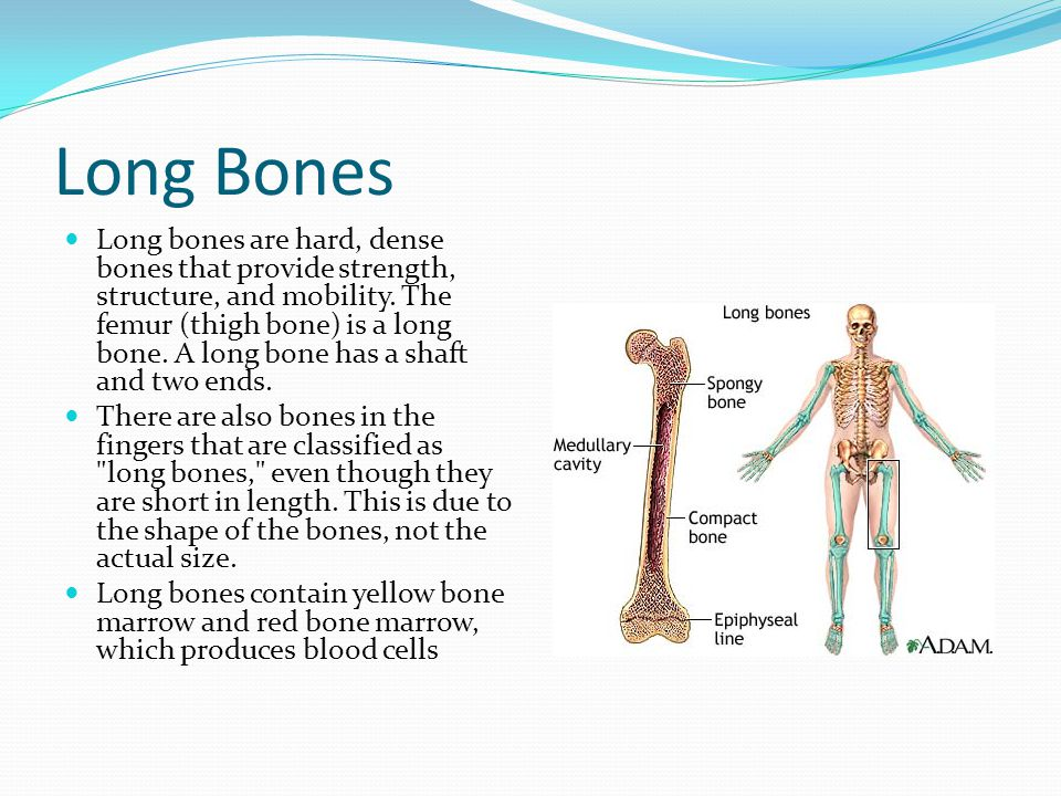 Long Bones Long bones are hard, dense bones that provide strength, structure, and mobility. The femur (thigh bone) is a long bone. A long bone has a s