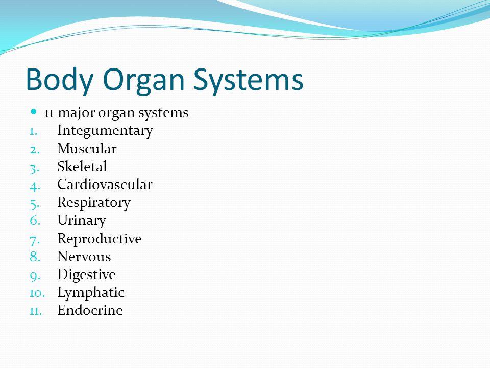 Body Organ Systems 11 major organ systems 1. Integumentary 2. Muscular 3. Skeletal 4. Cardiovascular 5. Respiratory 6. Urinary 7. Reproductive 8. Nerv