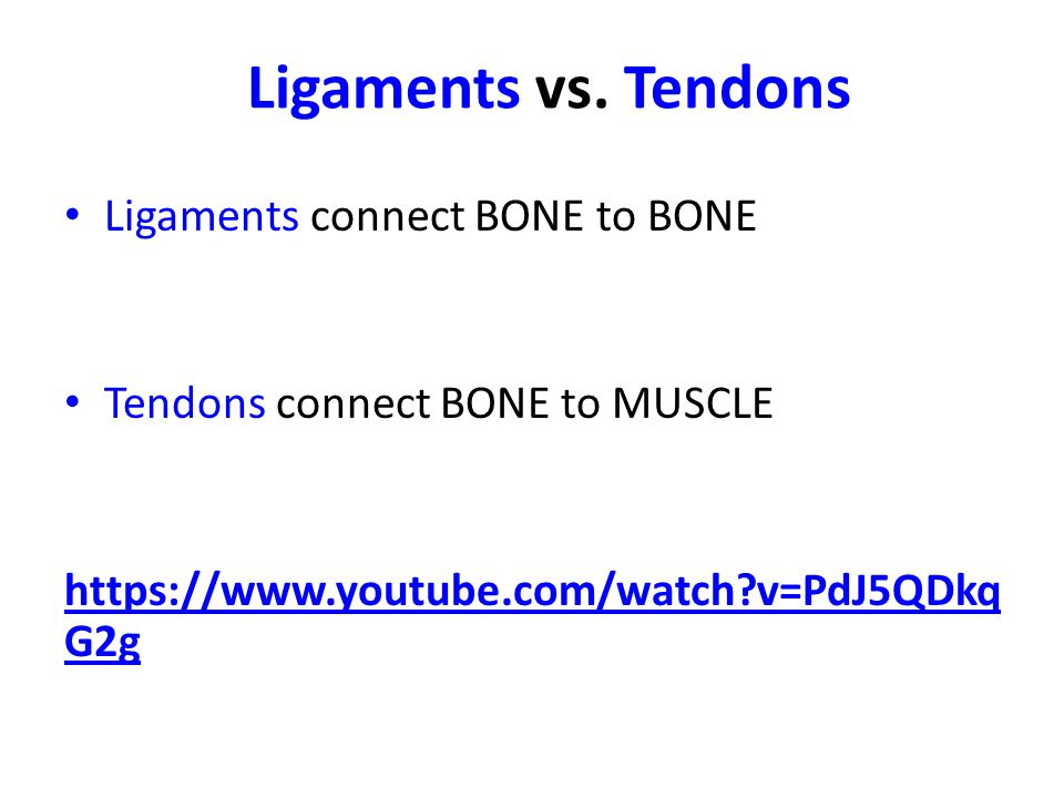 Ligaments vs. Tendons Ligaments connect BONE to BONE Tendons connect BONE to MUSCLE https://www.youtube.com/watch?v=PdJ5QDkq G2g