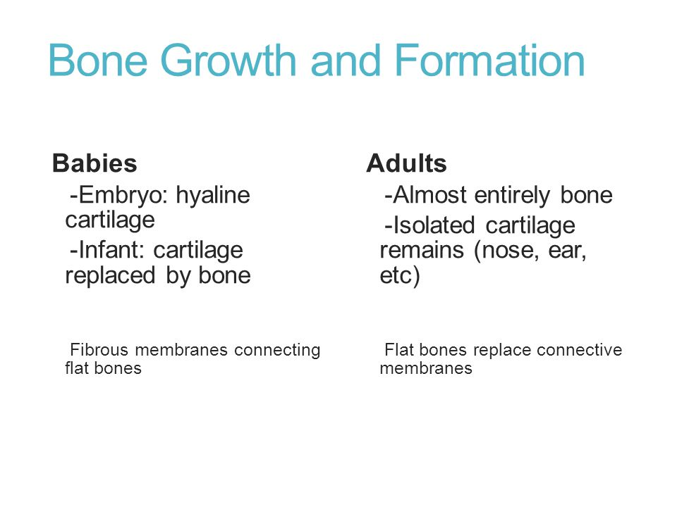 Bone Growth and Formation Babies -Embryo: hyaline cartilage -Infant: cartilage replaced by bone Fibrous membranes connecting flat bones Adults -Almost
