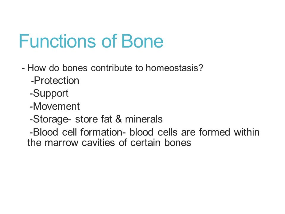 Functions of Bone - How do bones contribute to homeostasis? - Protection -Support -Movement -Storage- store fat & minerals -Blood cell formation- bloo