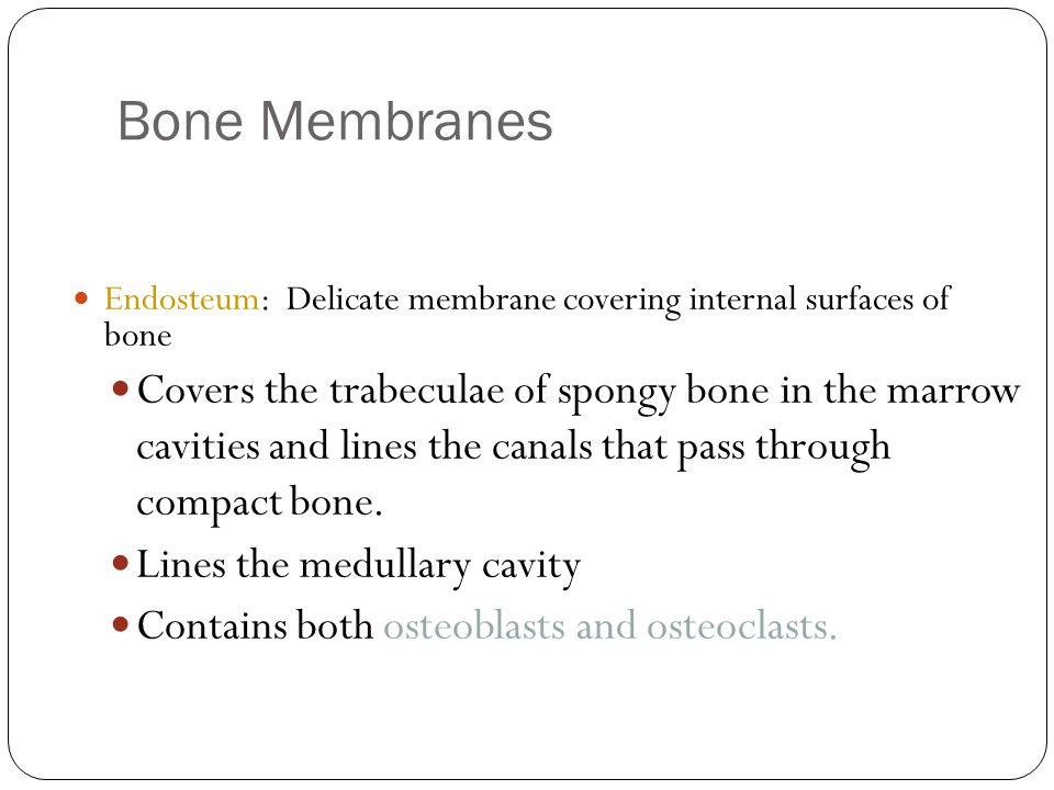 Bone Membranes 14 Endosteum: Delicate membrane covering internal surfaces of bone Covers the trabeculae of spongy bone in the marrow cavities and lines the canals that pass through compact bone.