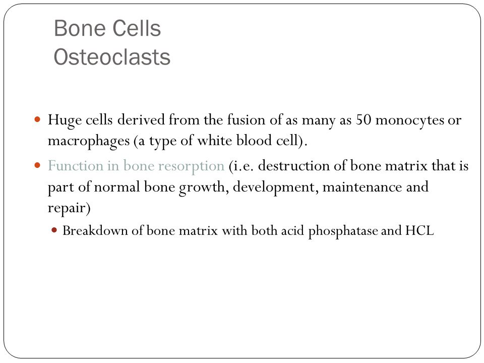 Bone Cells Osteoclasts 37 Huge cells derived from the fusion of as many as 50 monocytes or macrophages (a type of white blood cell).