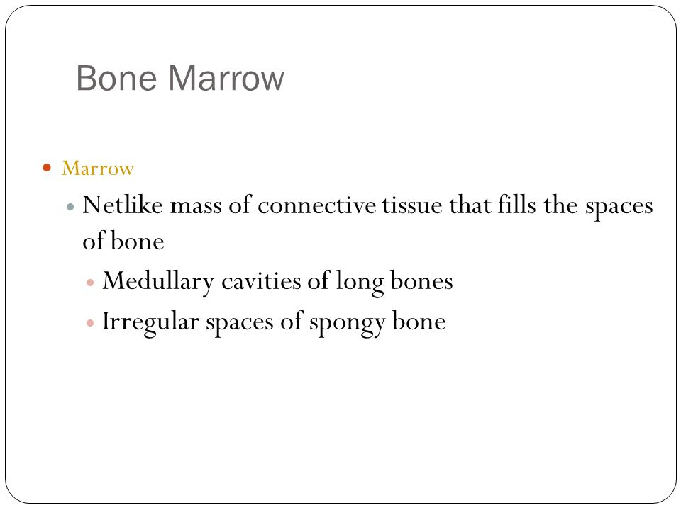 Bone Marrow 9 Marrow Netlike mass of connective tissue that fills the spaces of bone Medullary cavities of long bones Irregular spaces of spongy bone