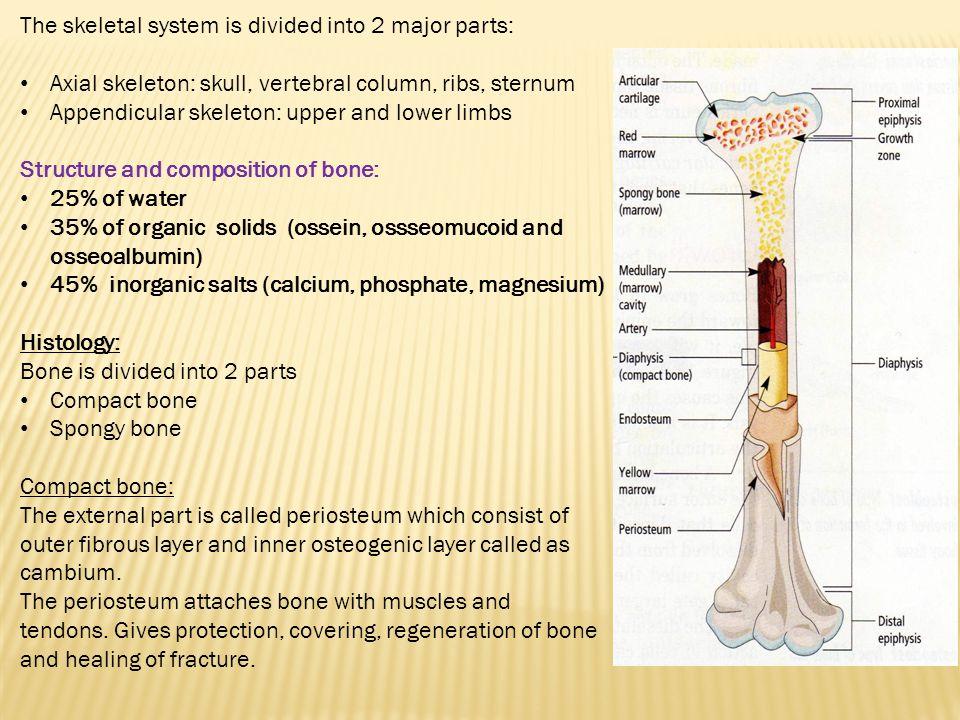 Bones of wrist and hands: