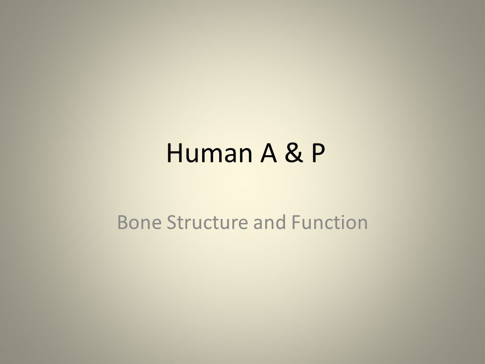 Human A & P Bone Structure and Function