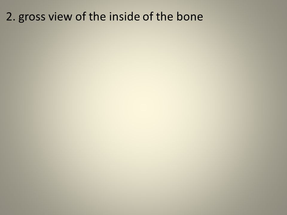 2. gross view of the inside of the bone