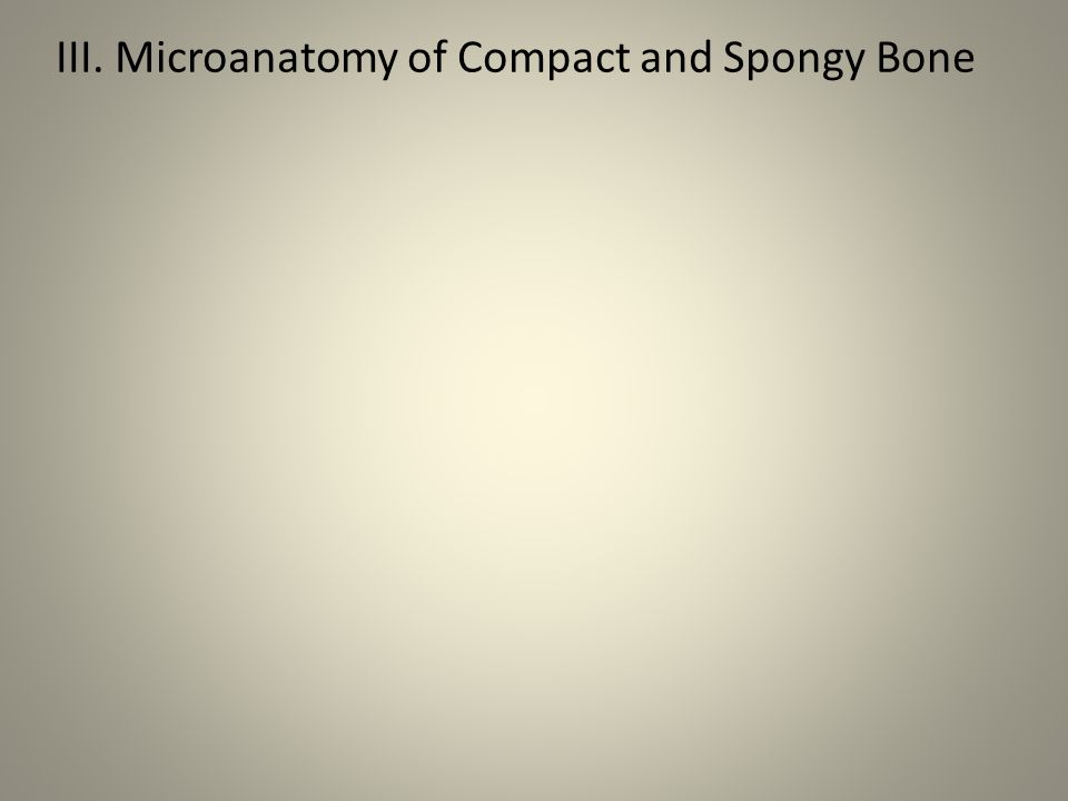 III. Microanatomy of Compact and Spongy Bone