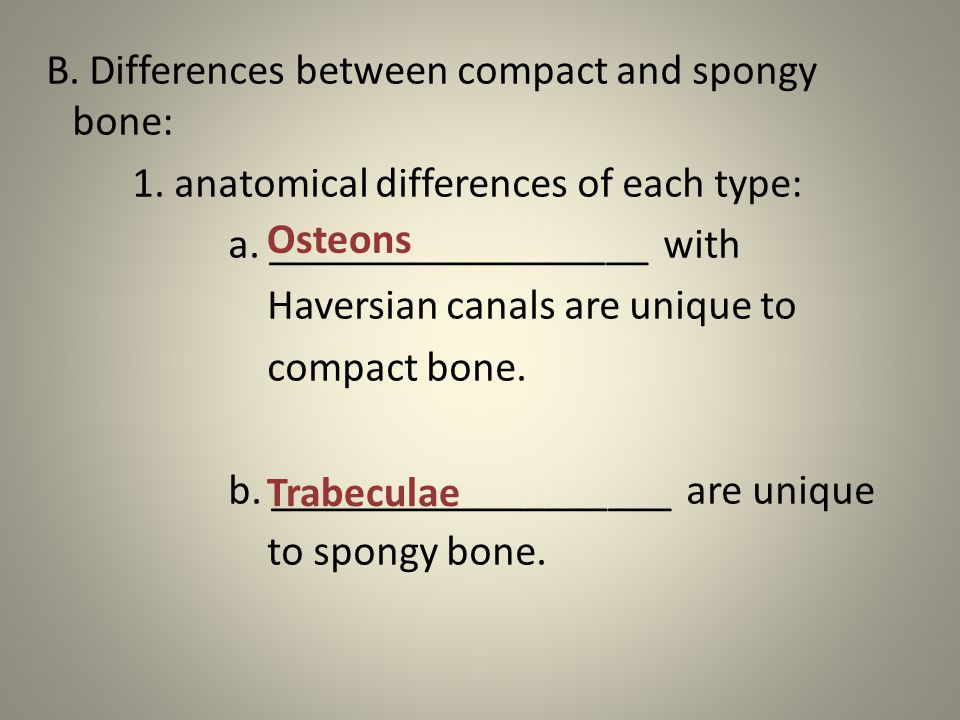 B. Differences between compact and spongy bone: 1.