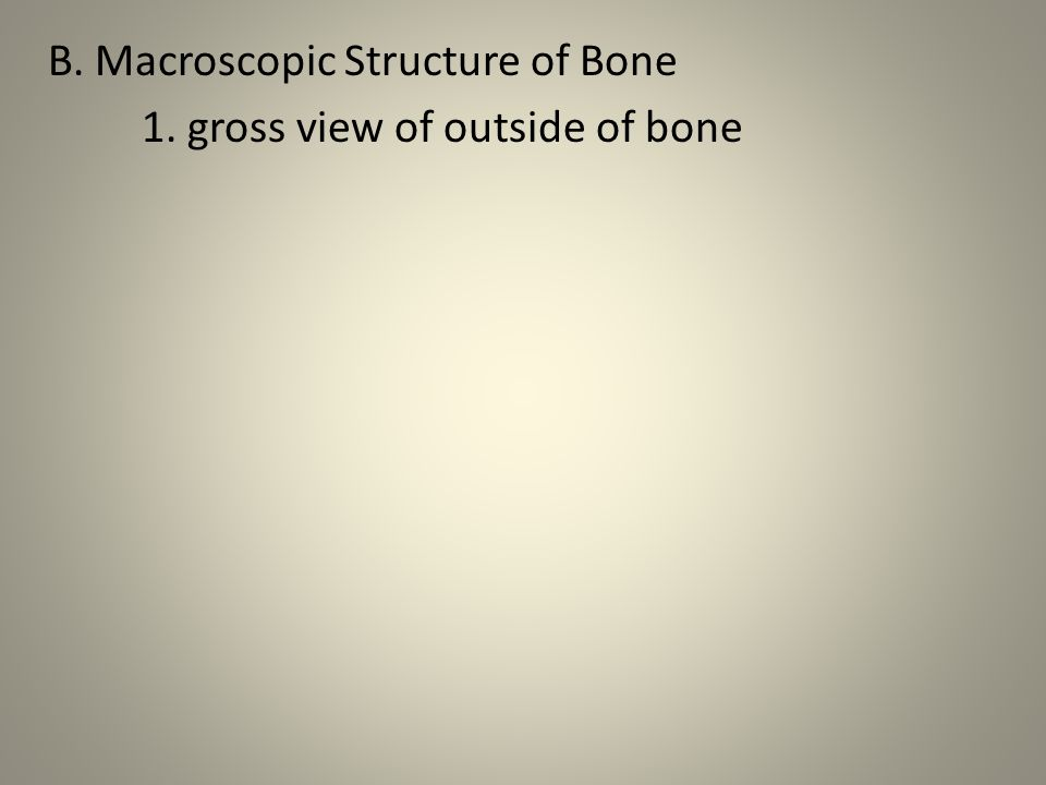 B. Macroscopic Structure of Bone 1. gross view of outside of bone