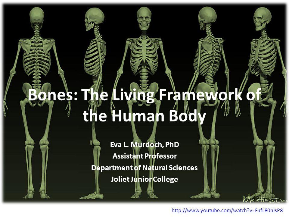Bones: The Living Framework of the Human Body Eva L.