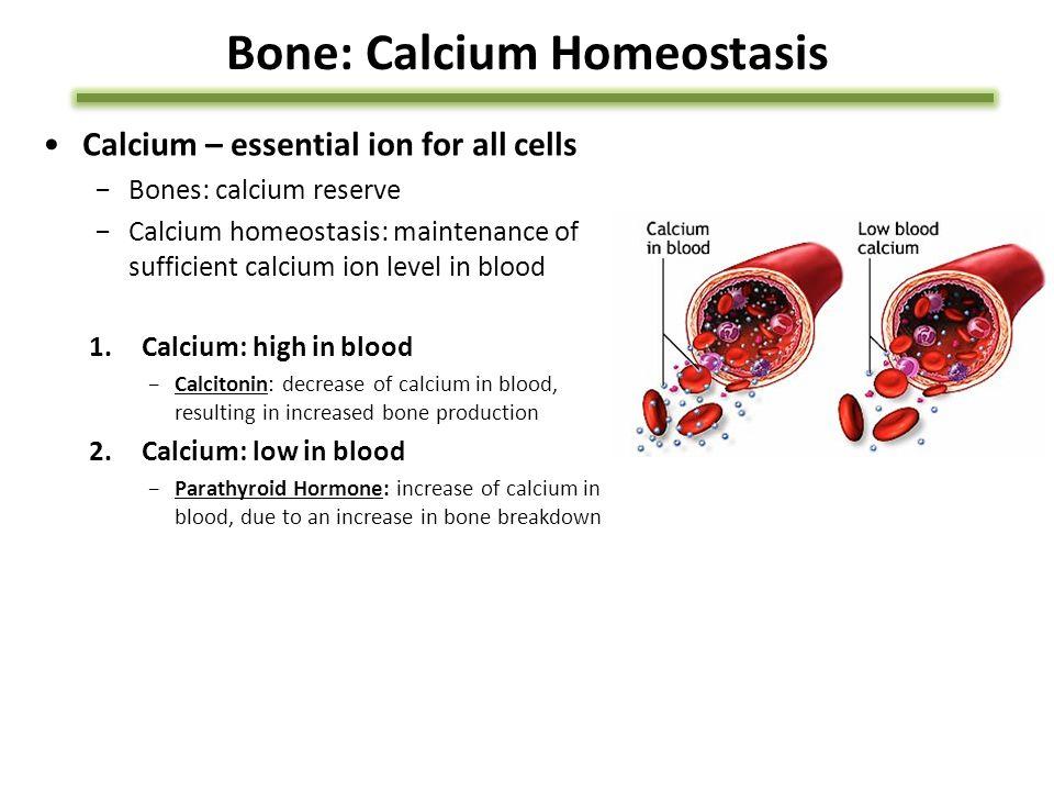Bone: Calcium Homeostasis Calcium – essential ion for all cells −Bones: calcium reserve −Calcium homeostasis: maintenance of sufficient calcium ion le