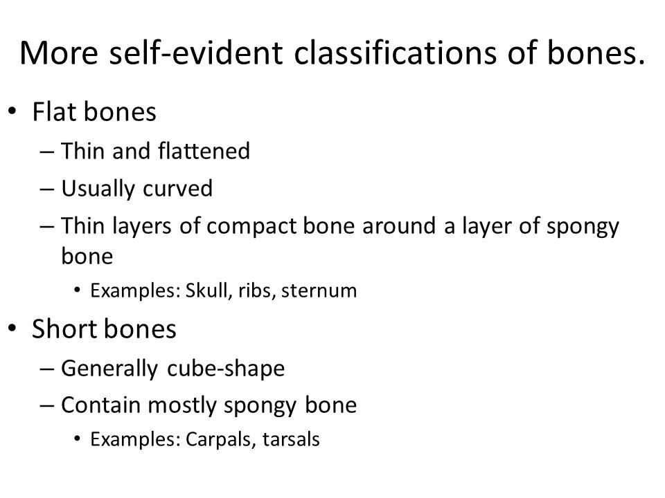 More self-evident classifications of bones.