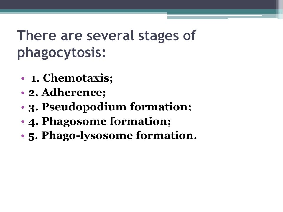 There are several stages of phagocytosis: 1. Chemotaxis; 2. Adherence; 3. Pseudopodium formation; 4. Phagosome formation; 5. Phago-lysosome formation.
