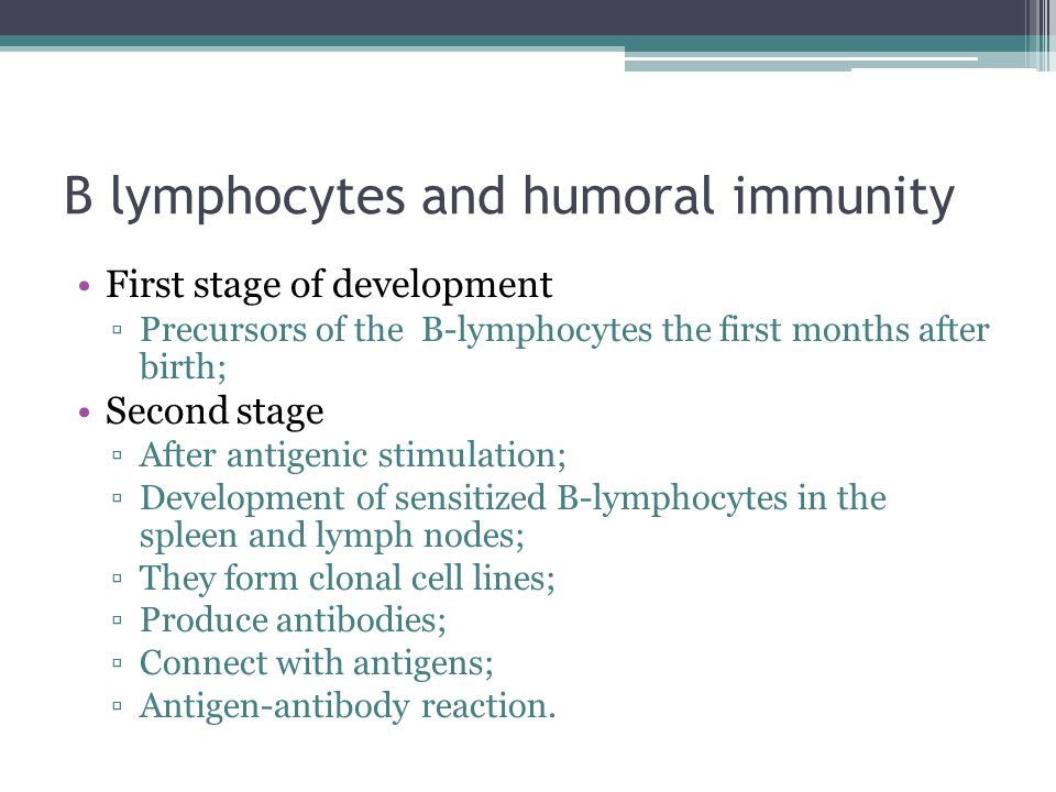 B lymphocytes and humoral immunity First stage of development ▫Precursors of the B-lymphocytes the first months after birth; Second stage ▫After antig
