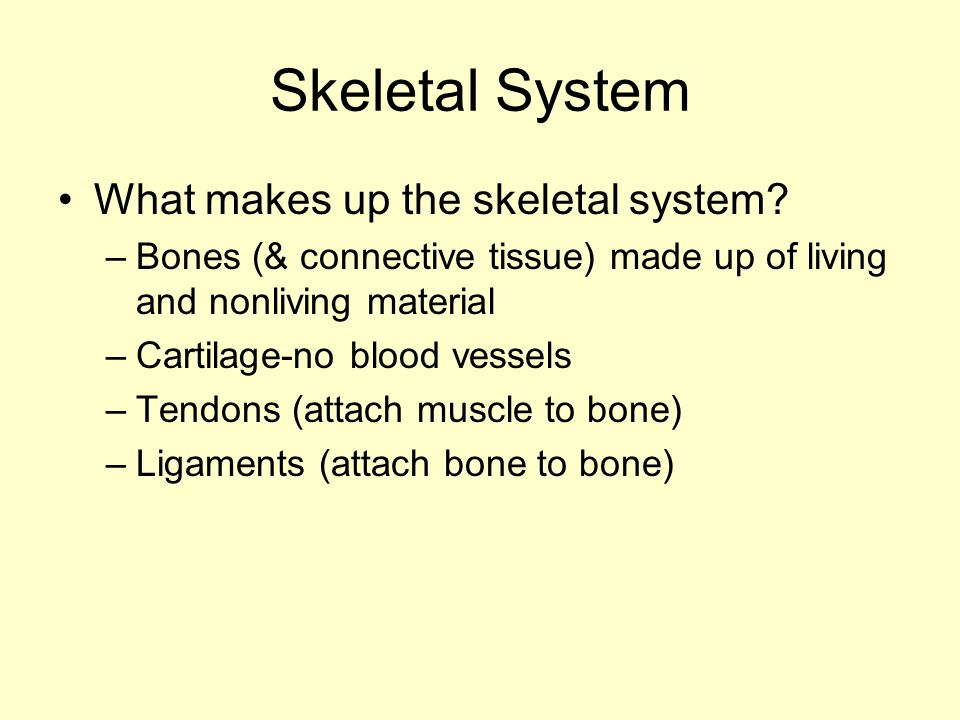 Skeletal System What makes up the skeletal system? –Bones (& connective tissue) made up of living and nonliving material –Cartilage-no blood vessels –