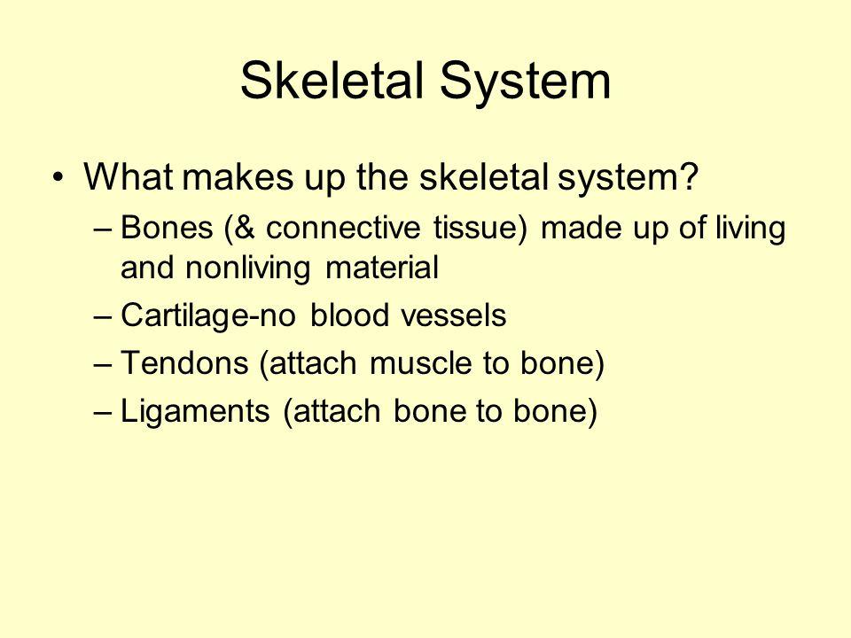 Skeletal System What makes up the skeletal system.
