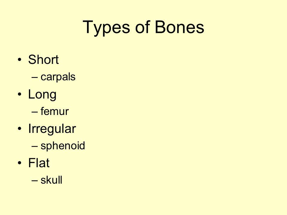 Types of Bones Short –carpals Long –femur Irregular –sphenoid Flat –skull