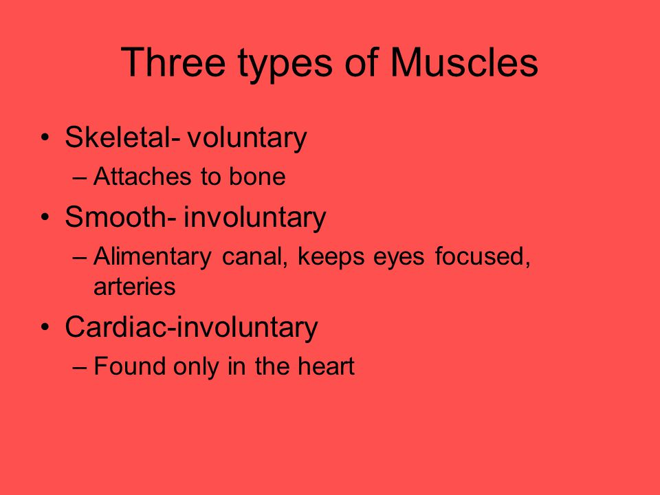 Three types of Muscles Skeletal- voluntary –Attaches to bone Smooth- involuntary –Alimentary canal, keeps eyes focused, arteries Cardiac-involuntary –Found only in the heart