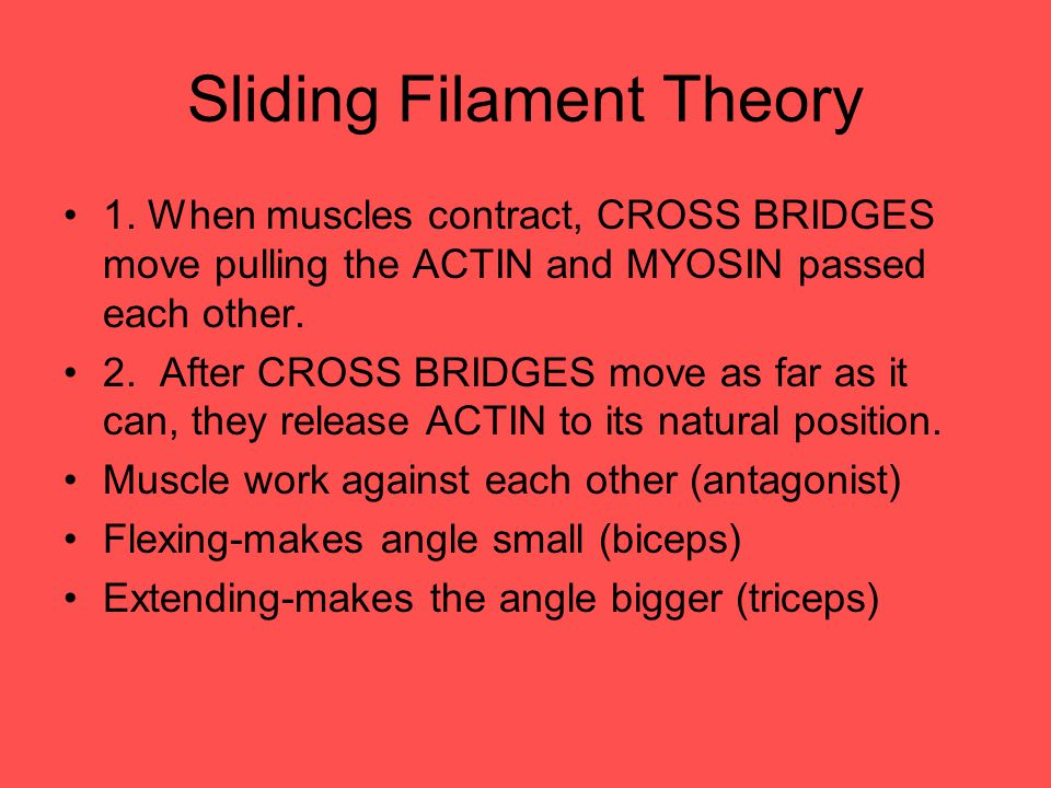 Sliding Filament Theory 1.