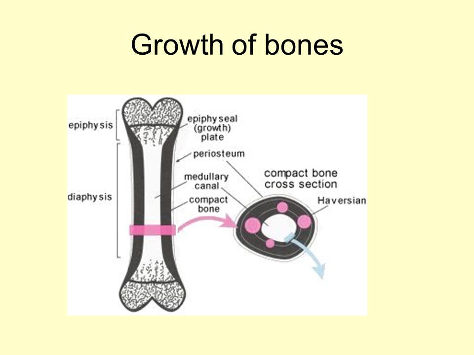 Growth of bones