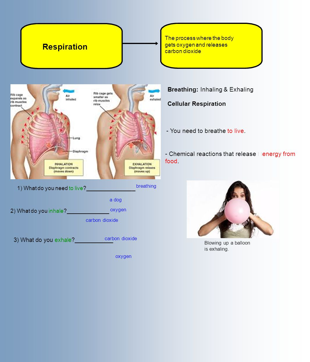 Respiration The process where the body gets oxygen and releases carbon dioxide Breathing: Inhaling & Exhaling - Chemical reactions that release energy from food.