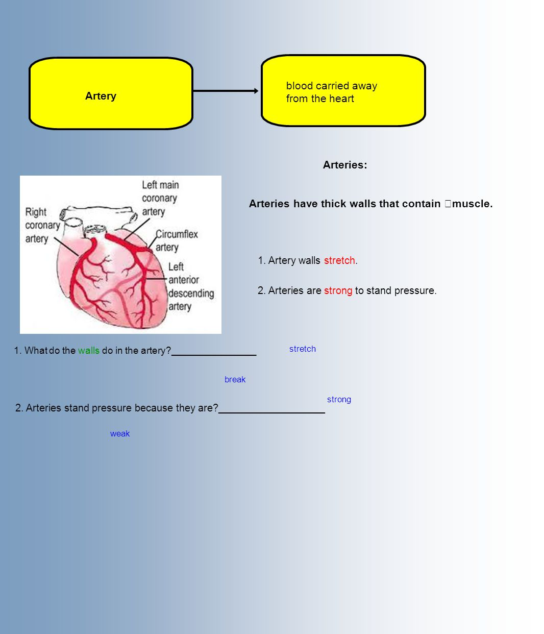 Artery blood carried away from the heart Arteries: Arteries have thick walls that contain muscle.