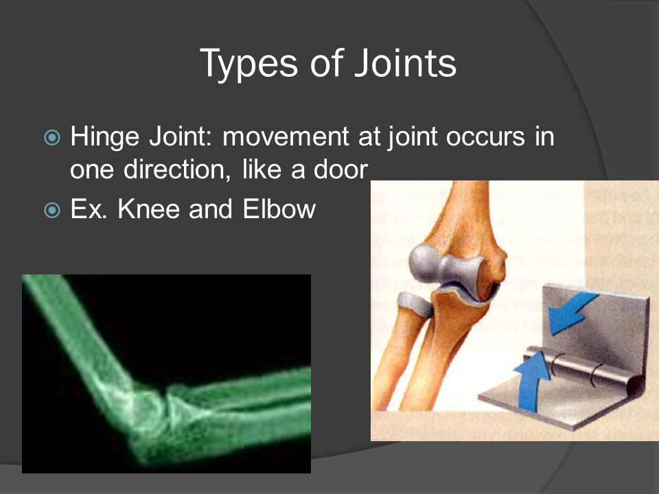 Types of Joints  Hinge Joint: movement at joint occurs in one direction, like a door  Ex. Knee and Elbow