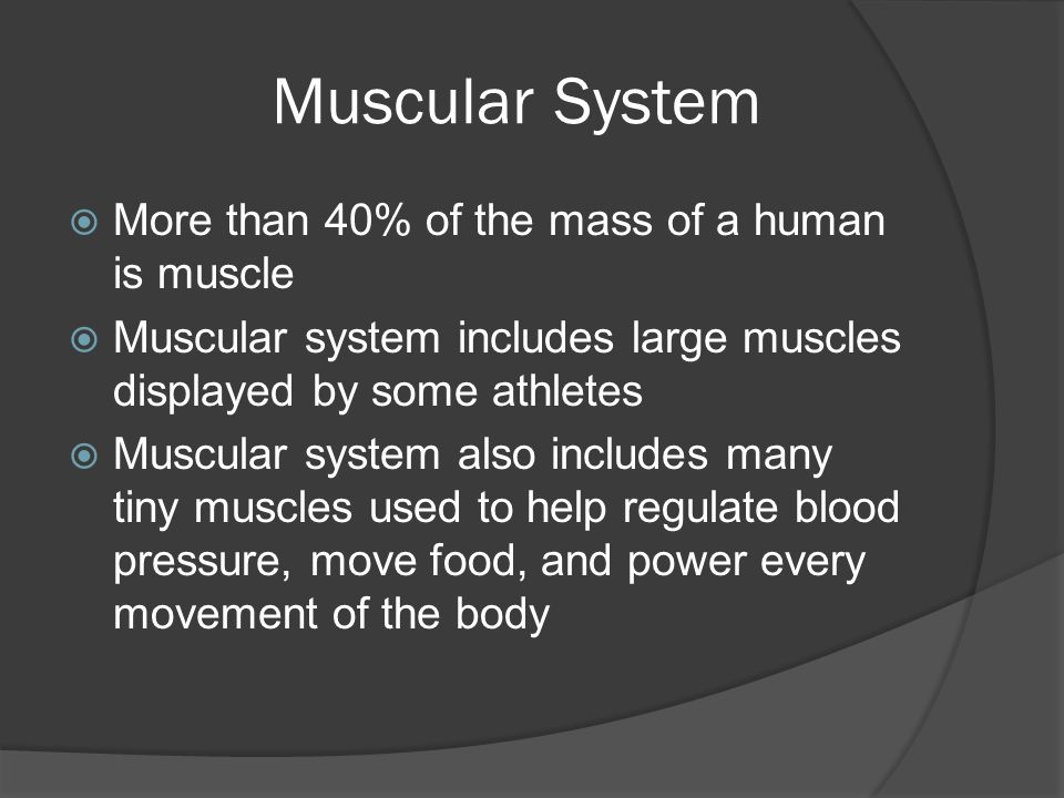 Muscular System  More than 40% of the mass of a human is muscle  Muscular system includes large muscles displayed by some athletes  Muscular system