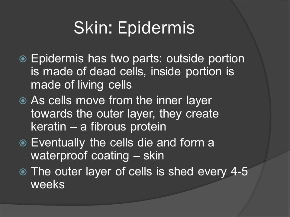 Skin: Epidermis  Epidermis has two parts: outside portion is made of dead cells, inside portion is made of living cells  As cells move from the inne