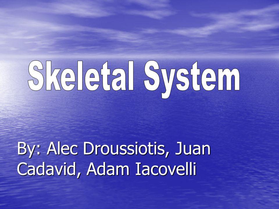 By: Alec Droussiotis, Juan Cadavid, Adam Iacovelli