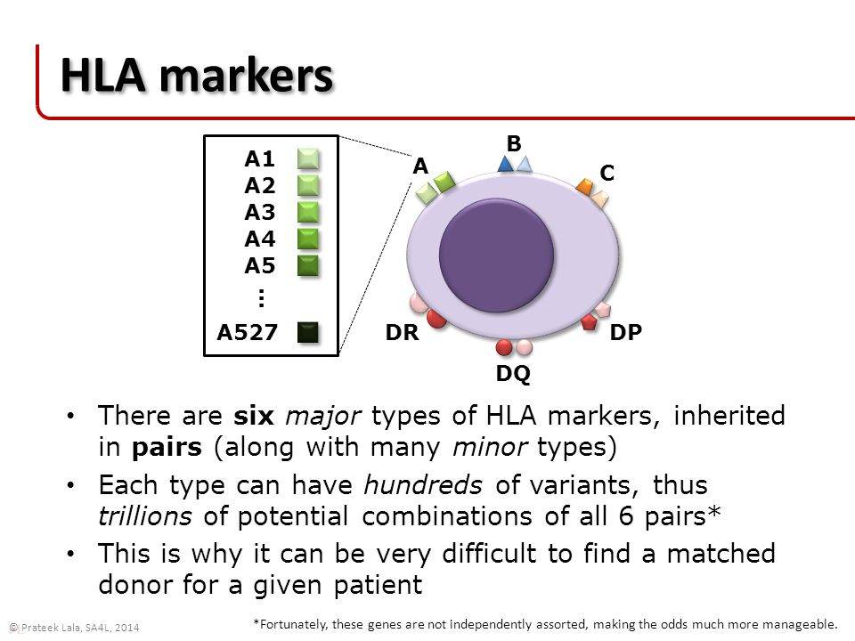 PL © Prateek Lala, SA4L, 2014 HLA markers There are six major types of HLA markers, inherited in pairs (along with many minor types) Each type can have hundreds of variants, thus trillions of potential combinations of all 6 pairs* This is why it can be very difficult to find a matched donor for a given patient A B C DR DQ DP A1 A2 A3 A4 A5 … A527 *Fortunately, these genes are not independently assorted, making the odds much more manageable.