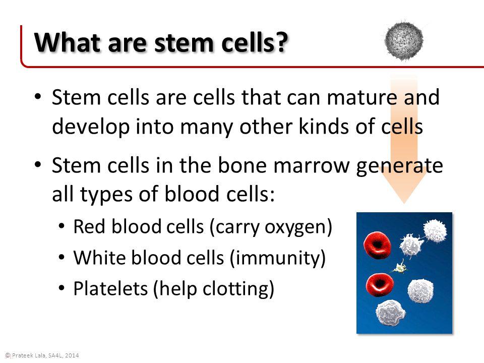 PL © Prateek Lala, SA4L, 2014 What are stem cells.