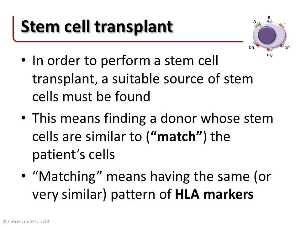 PL © Prateek Lala, SA4L, 2014 Stem cell transplant In order to perform a stem cell transplant, a suitable source of stem cells must be found This means finding a donor whose stem cells are similar to ( match ) the patient's cells Matching means having the same (or very similar) pattern of HLA markers A B C DR DQ DP