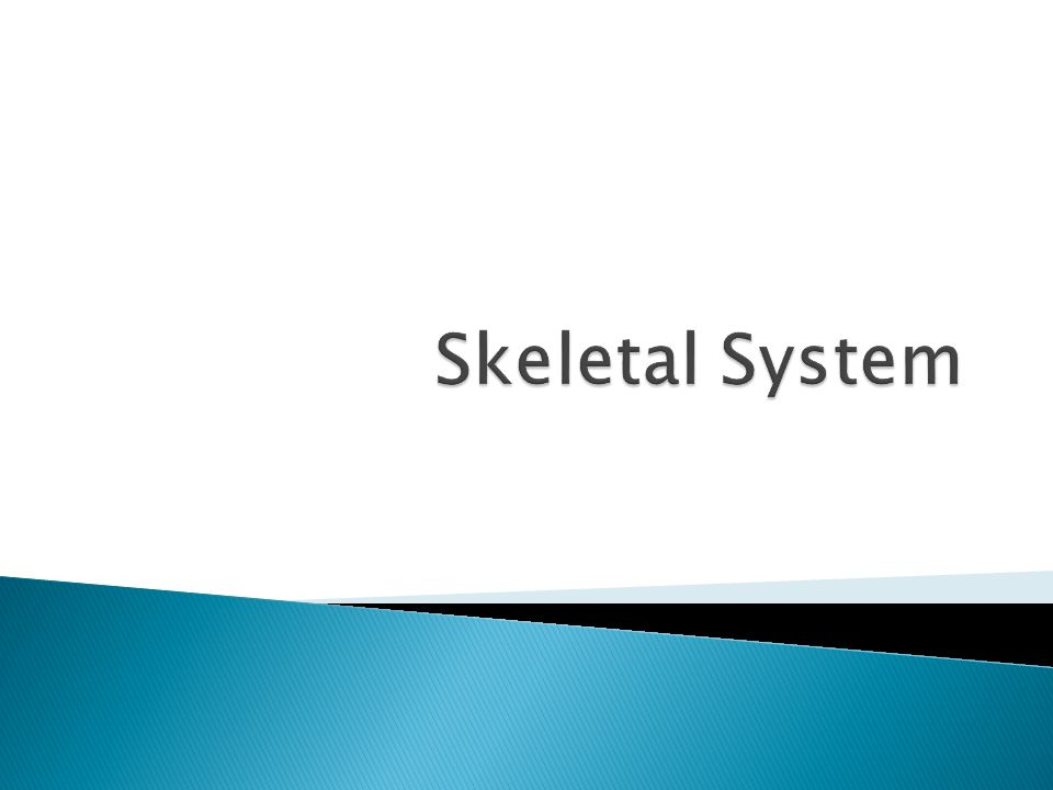  Revise the names of bones  Understand the functions of bone  List the types of bone  Explain the structure of bone