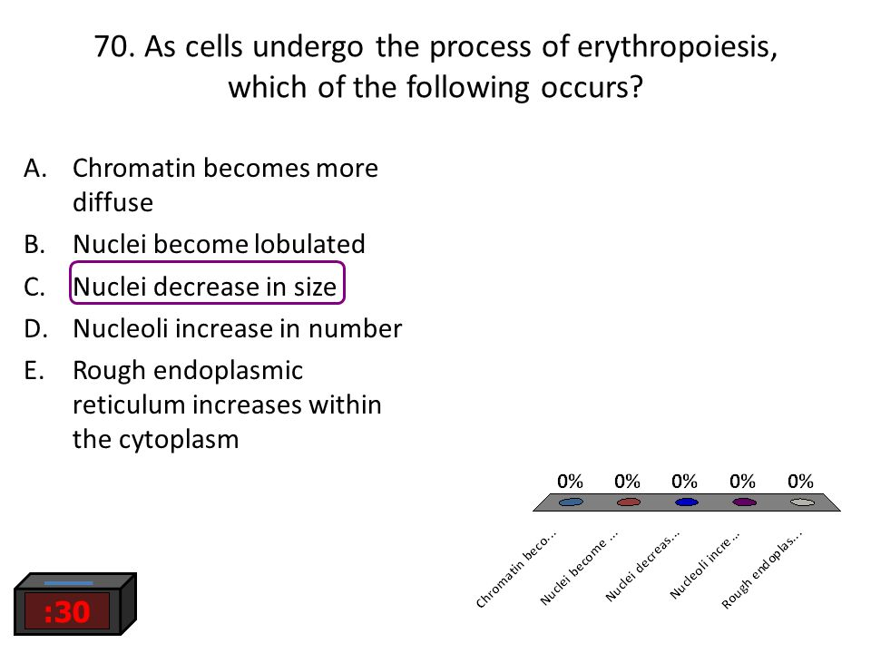 70. As cells undergo the process of erythropoiesis, which of the following occurs? :30 A.Chromatin becomes more diffuse B.Nuclei become lobulated C.Nu
