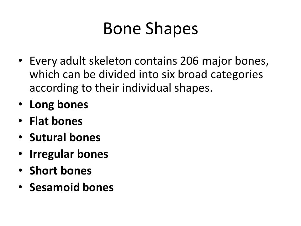 Bone Shapes Every adult skeleton contains 206 major bones, which can be divided into six broad categories according to their individual shapes. Long b