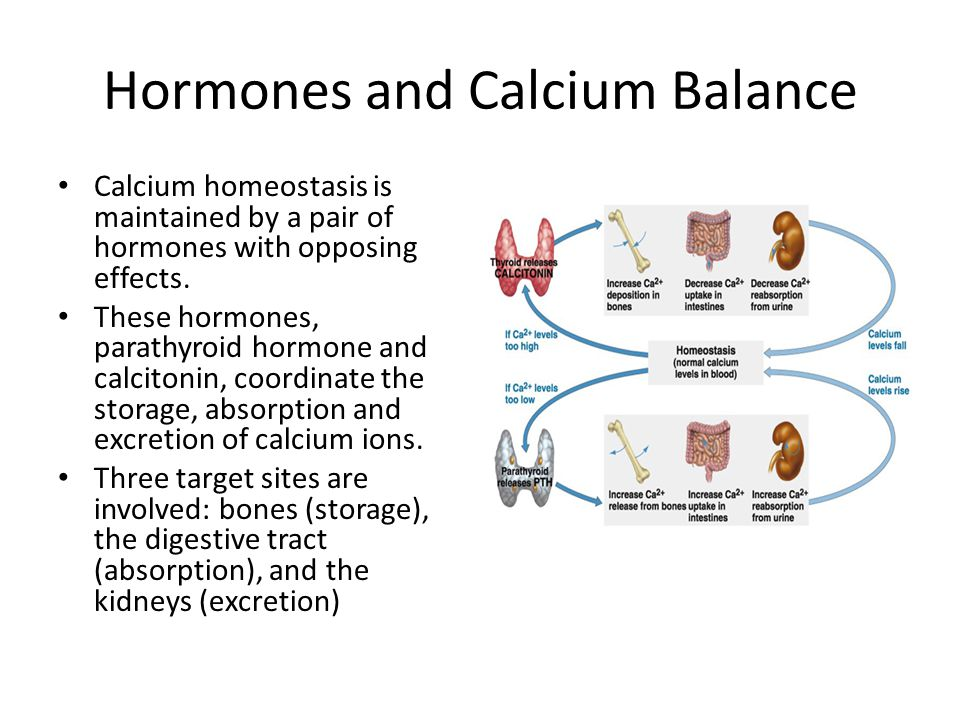 Hormones and Calcium Balance Calcium homeostasis is maintained by a pair of hormones with opposing effects. These hormones, parathyroid hormone and ca