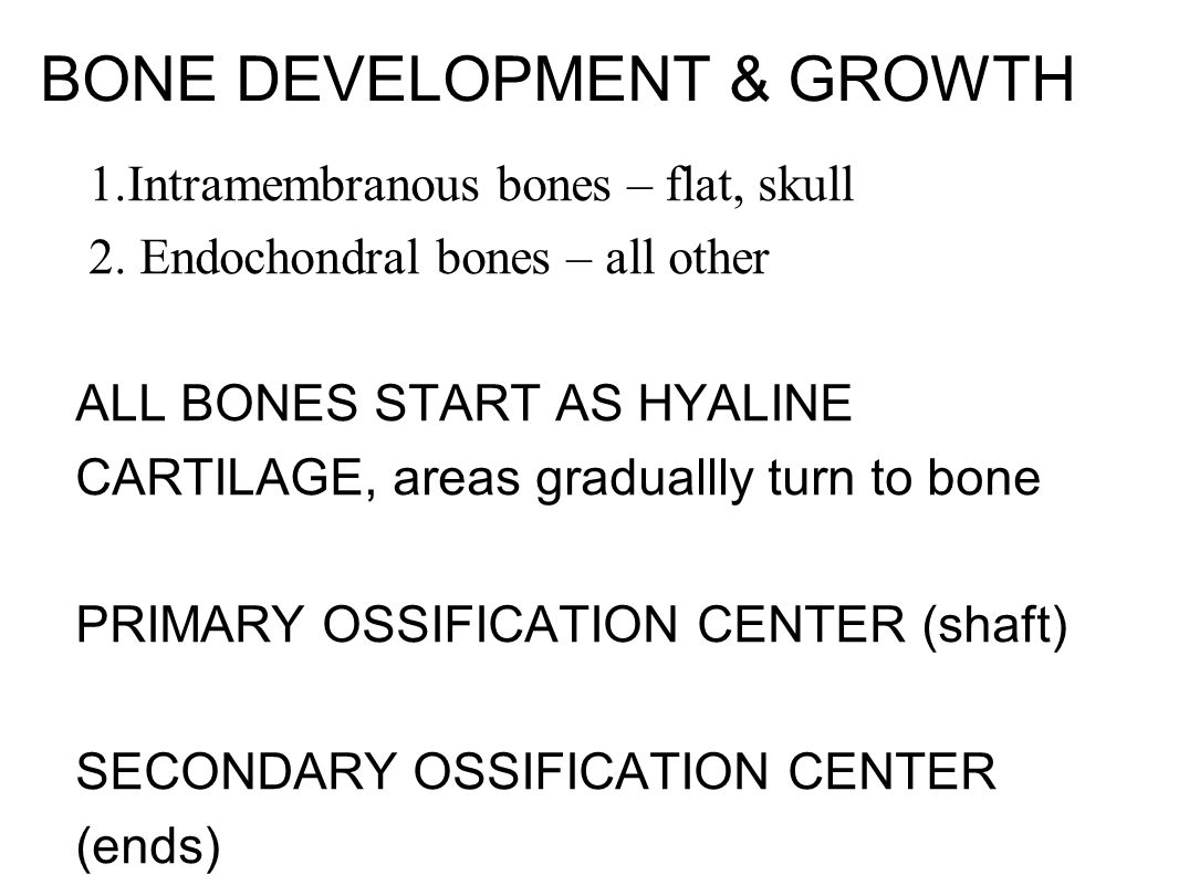 BONE DEVELOPMENT & GROWTH 1. Intramembranous bones – flat, skull 2. Endochondral bones – all other ALL BONES START AS HYALINE CARTILAGE, areas gradual