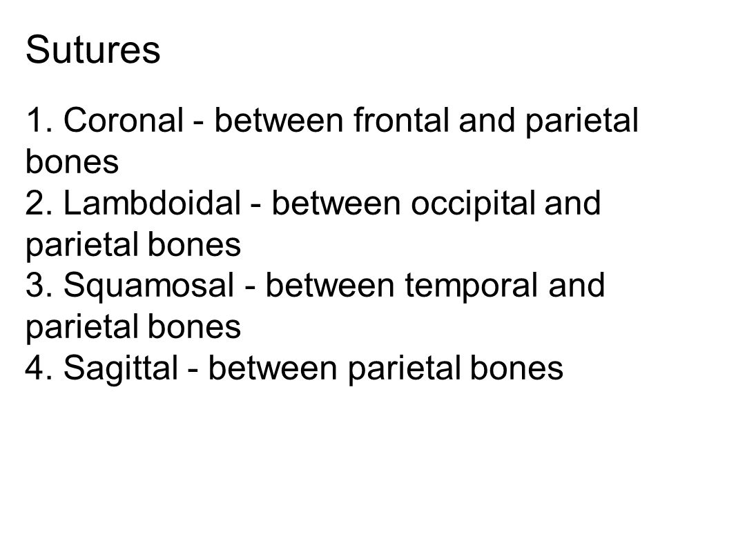Sutures 1. Coronal - between frontal and parietal bones 2. Lambdoidal - between occipital and parietal bones 3. Squamosal - between temporal and parie